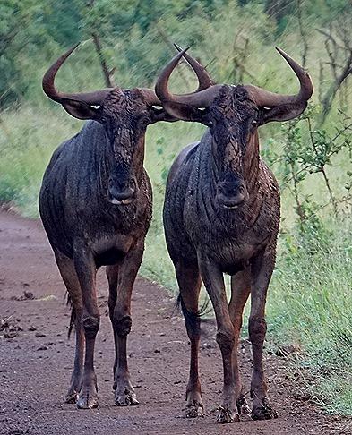 330. Kruger Nat Park, South Africa