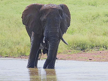 334. Kruger Nat Park, South Africa