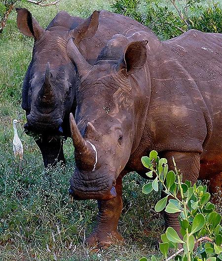 339   Kruger Nat Park, South Africa