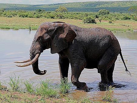 340. Kruger Nat Park, South Africa