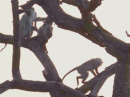 341. Kruger Nat Park, South Africa