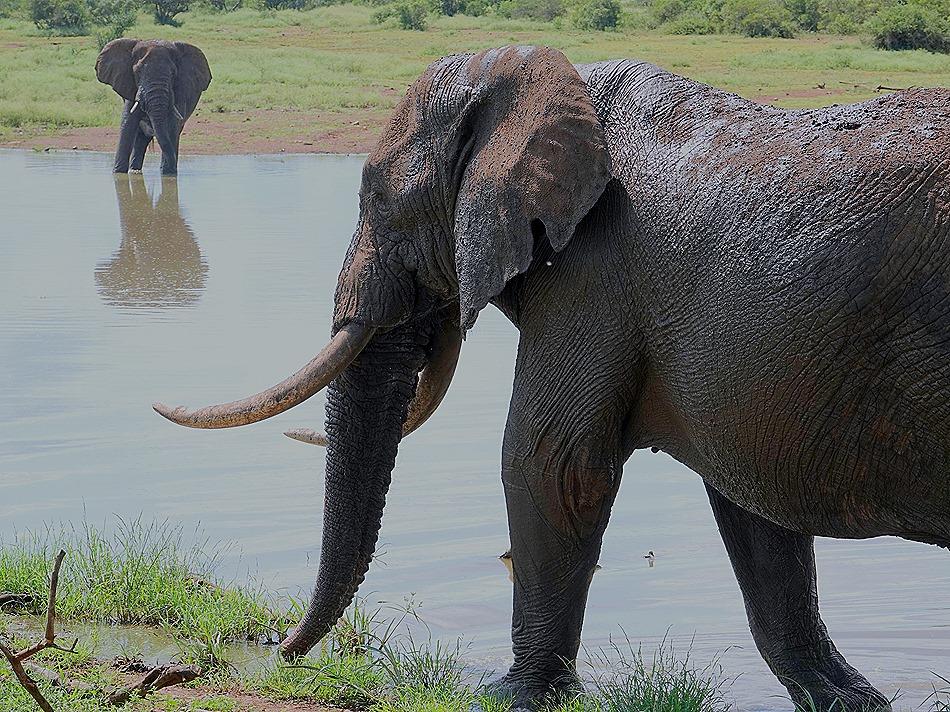 342. Kruger Nat Park, South Africa