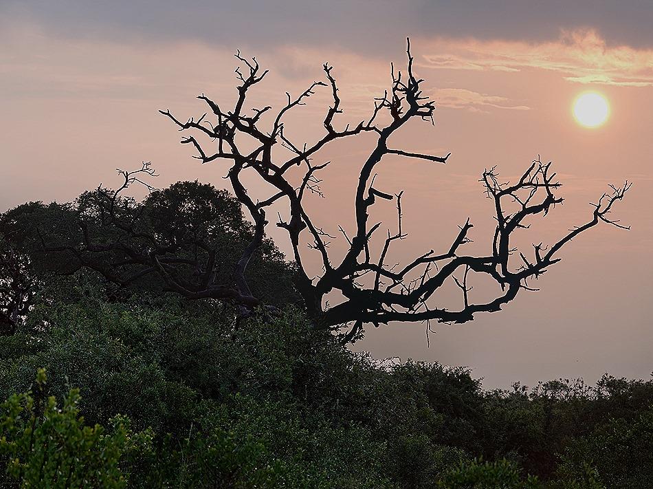 343a. Kruger Nat Park, South Africa_stitch