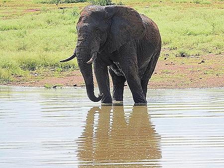 346. Kruger Nat Park, South Africa