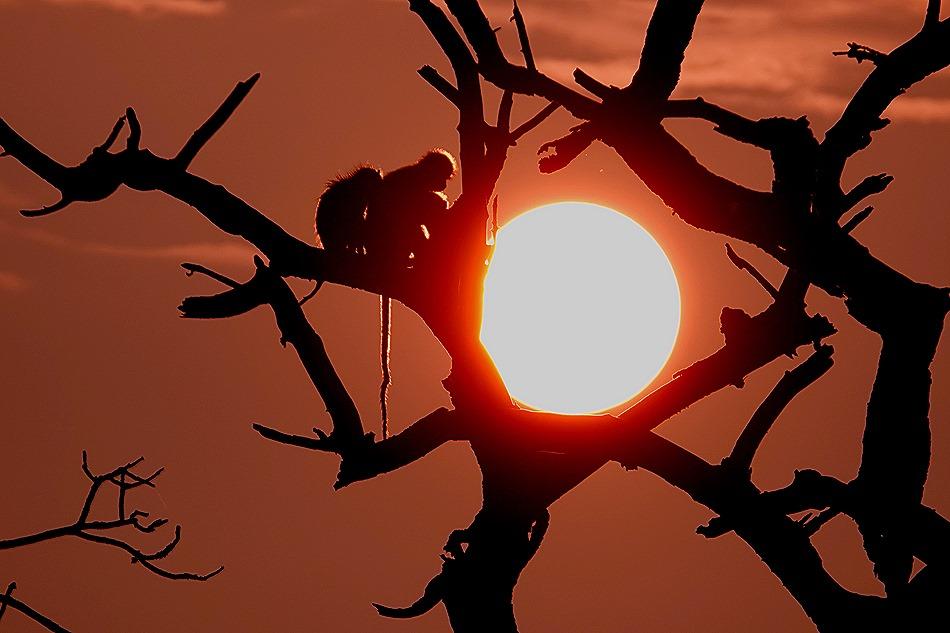 349a. Kruger Nat Park, South Africa
