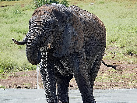 358. Kruger Nat Park, South Africa
