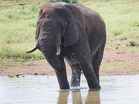 359. Kruger Nat Park, South Africa