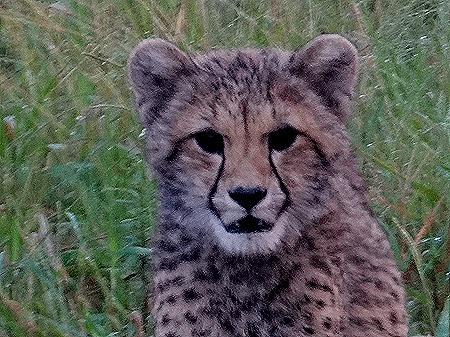361. Kruger Nat Park, South Africa