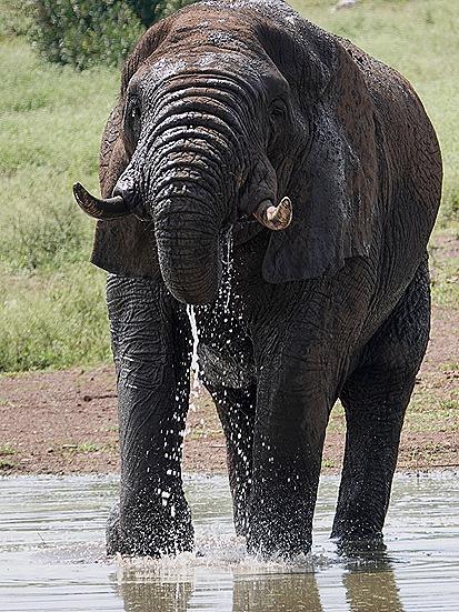 362. Kruger Nat Park, South Africa