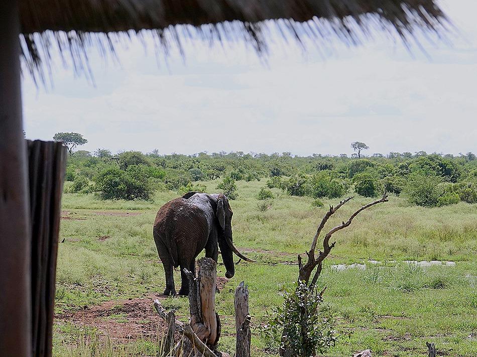 363. Kruger Nat Park, South Africa