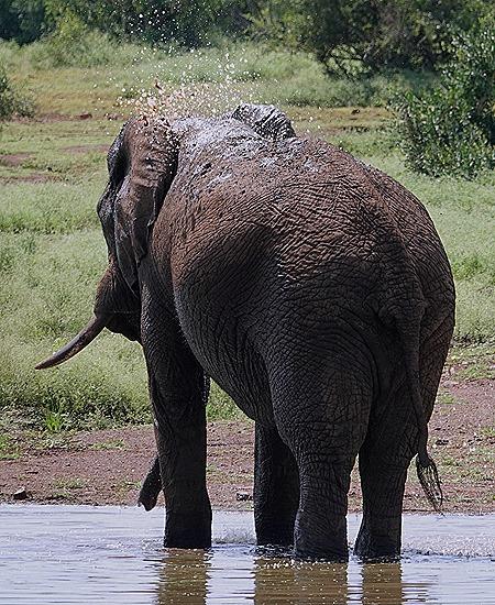 364. Kruger Nat Park, South Africa