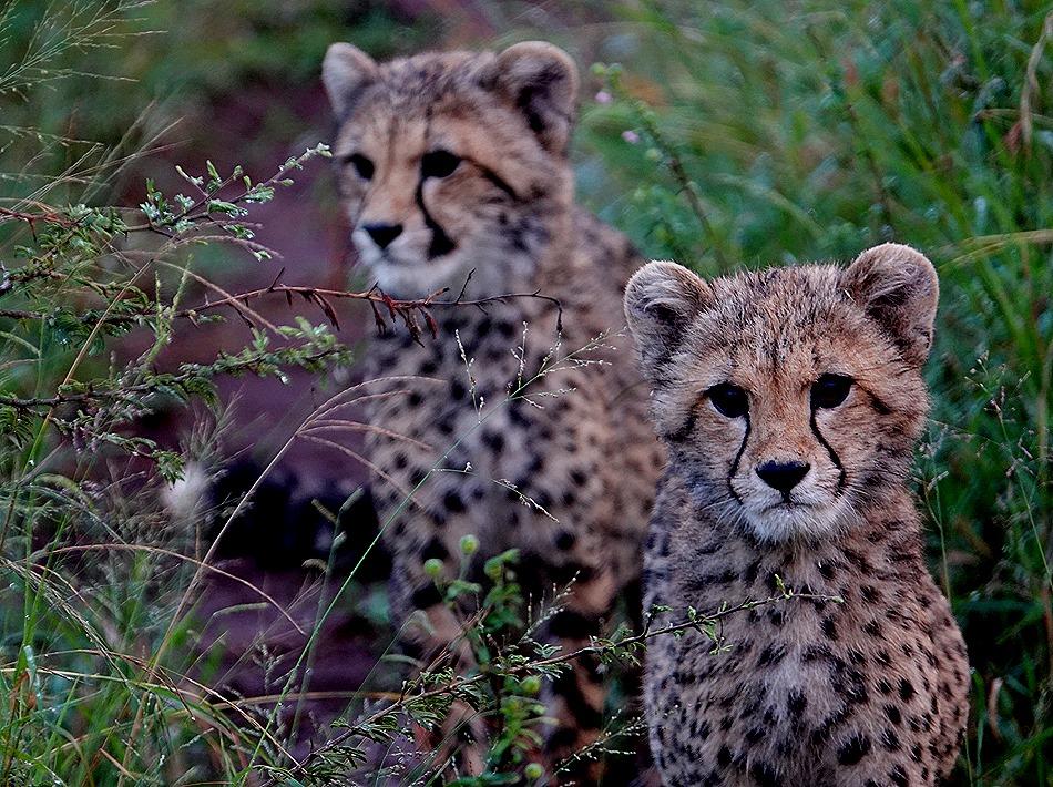 367. Kruger Nat Park, South Africa