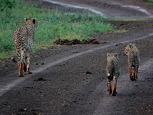 369. Kruger Nat Park, South Africa