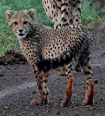370. Kruger Nat Park, South Africa