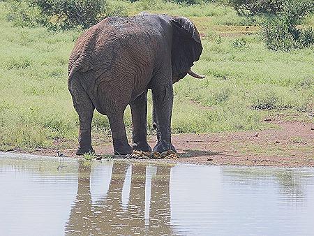 372. Kruger Nat Park, South Africa