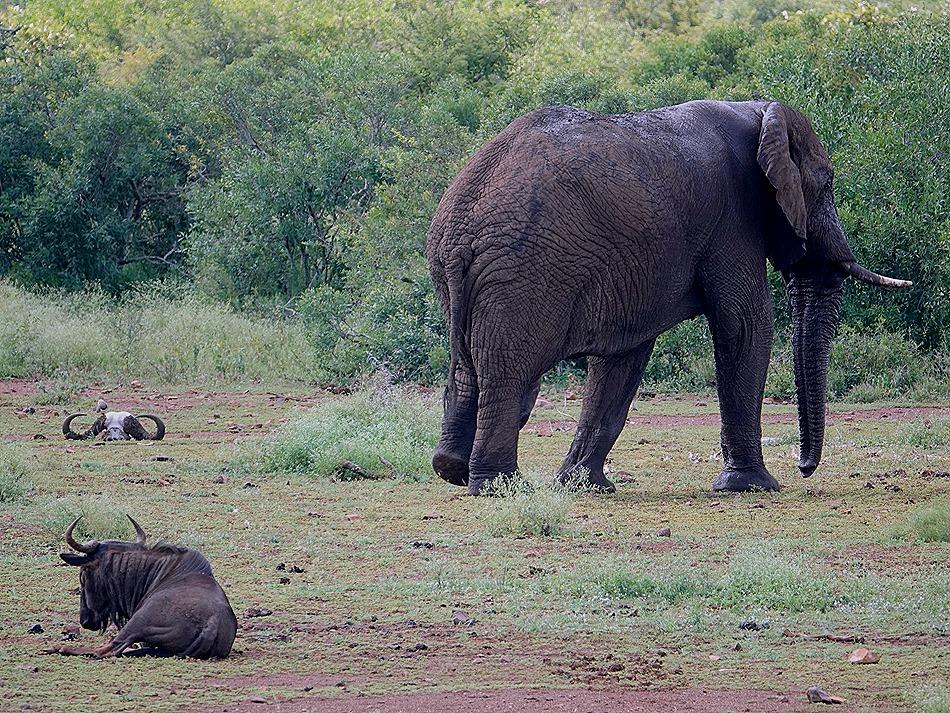 379. Kruger Nat Park, South Africa
