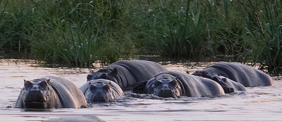 38. Kruger Nat Park, South Africa