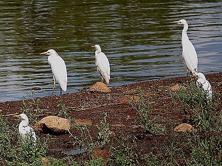 380. Kruger Nat Park, South Africa