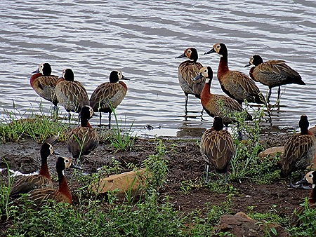 385. Kruger Nat Park, South Africa