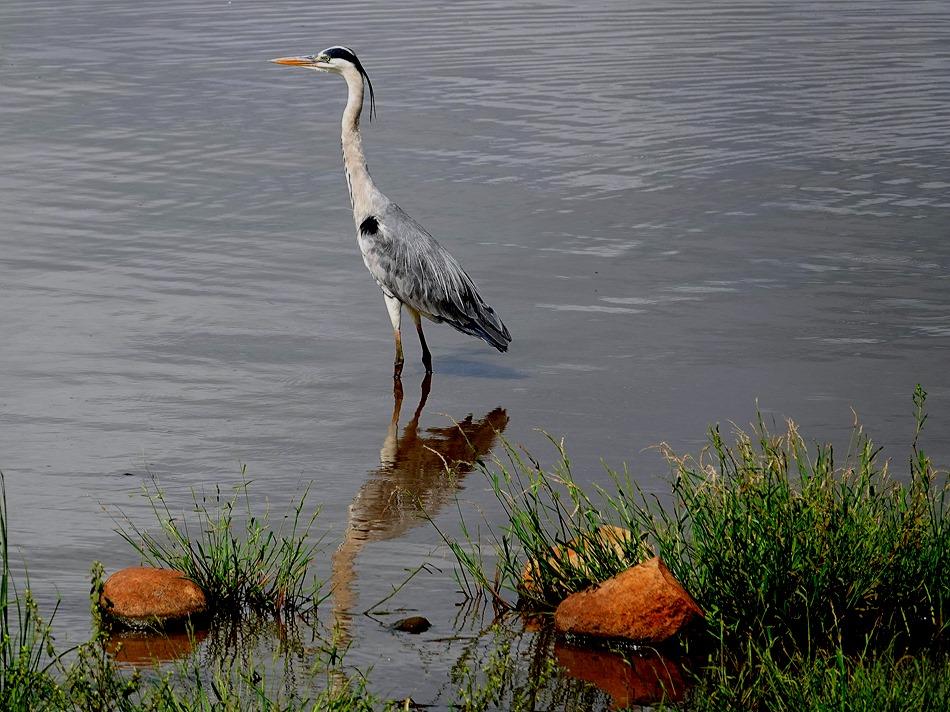 387. Kruger Nat Park, South Africa