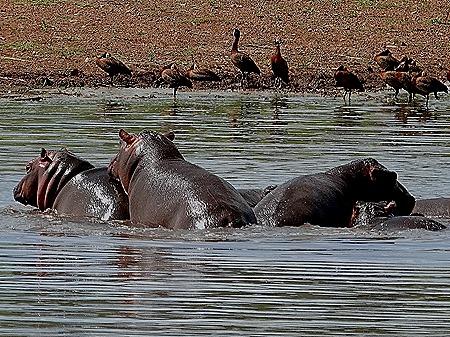 395. Kruger Nat Park, South Africa