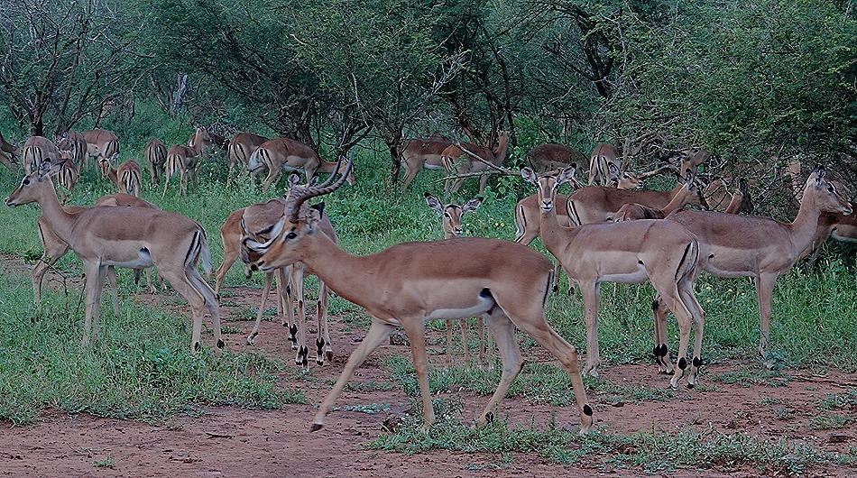 400. Kruger Nat Park, South Africa
