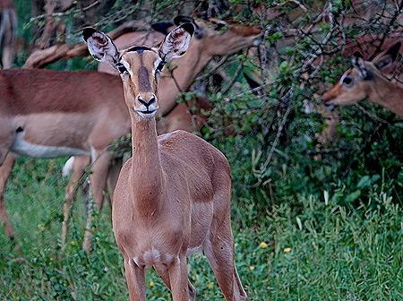 403. Kruger Nat Park, South Africa