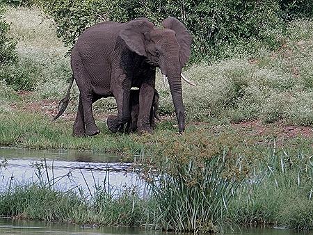 417. Kruger Nat Park, South Africa