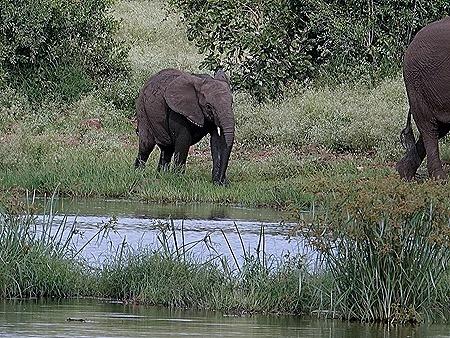418. Kruger Nat Park, South Africa