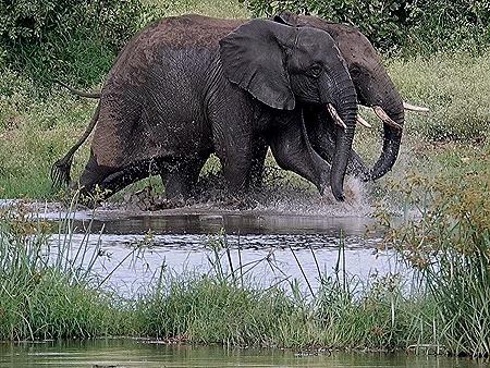 422. Kruger Nat Park, South Africa