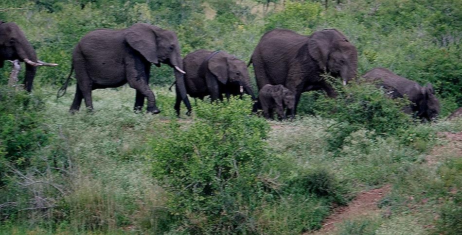 424. Kruger Nat Park, South Africa