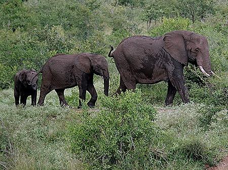 427. Kruger Nat Park, South Africa