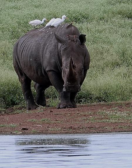 430. Kruger Nat Park, South Africa