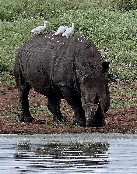 431. Kruger Nat Park, South Africa