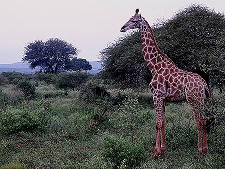 434. Kruger Nat Park, South Africa