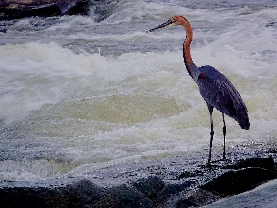 441. Kruger Nat Park, South Africa