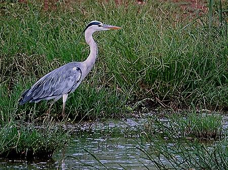 447. Kruger Nat Park, South Africa