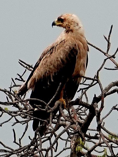 45. Kruger Nat Park, South Africa