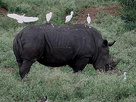 451. Kruger Nat Park, South Africa