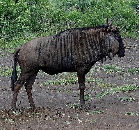 452. Kruger Nat Park, South Africa