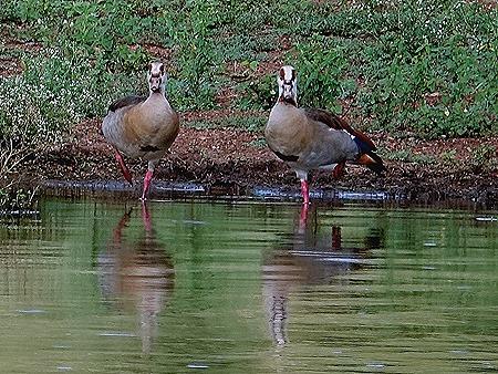 459. Kruger Nat Park, South Africa