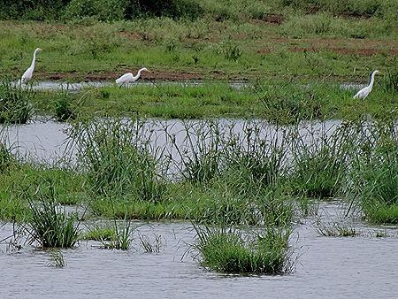 460. Kruger Nat Park, South Africa