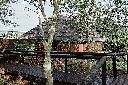 461. Kruger Nat Park, South Africa