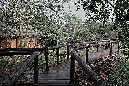 462. Kruger Nat Park, South Africa