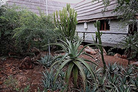 479. Kruger Nat Park, South Africa