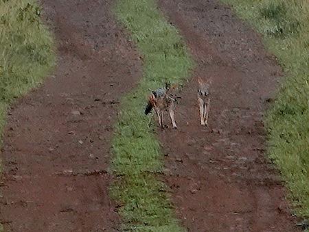 48. Kruger Nat Park, South Africa
