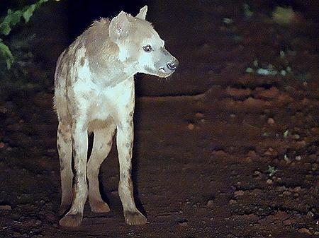 489. Kruger Nat Park, South Africa