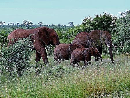 494. Kruger Nat Park, South Africa