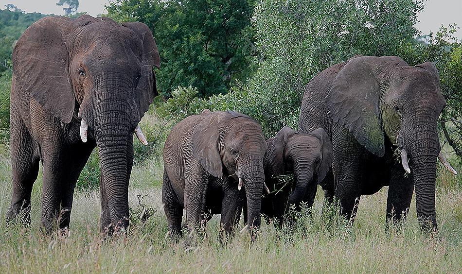 495. Kruger Nat Park, South Africa