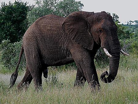 499. Kruger Nat Park, South Africa